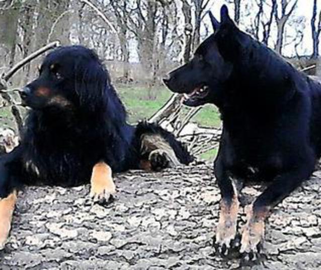 Arnold und Ronja - Wo sind die Hunde?